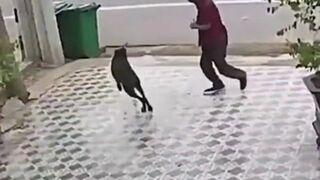 Jak się skutecznie bronić przed psami
