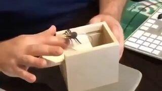 Pudełko z niespodzianką