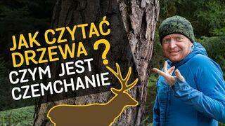 Jak czytać drzewa? Od czego zależy ich wygląd? Czym jest czemchanie? - o Lesie #41