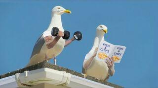 Gdyby ptaki miały ręce