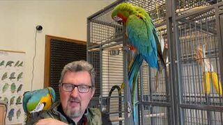 Ile kosztuje papuga Ara. Papuzi Vlog #10.