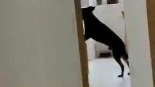 Sprytny pies podjada z patelni
