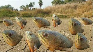 A ryby łowi się tak... :)