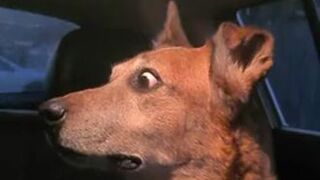 Reakcja psa na kłótnie