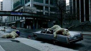 Niedźwiedzie polarne spadają z nieba!