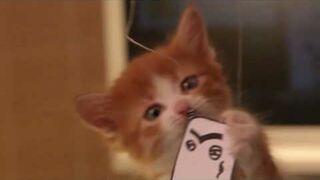 Kaspersky ochroni cię kotem