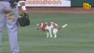 Pogoń za psem podczas meczu baseballowego
