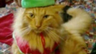 """Zwierzęta śpiewają """"Jingle Bells"""""""