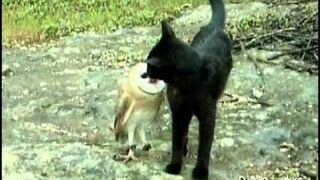 Kot i Sowa - Zabawa