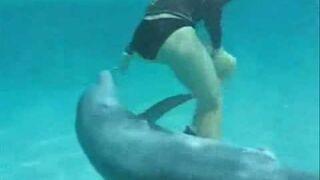 Napalony delfin