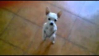El Dog