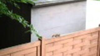 Skoczny wiewiór