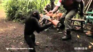 Dali małpie karabin