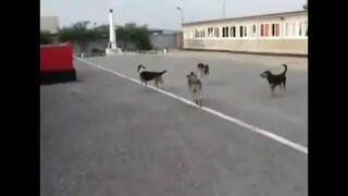 Psy i Rosyjski hymn