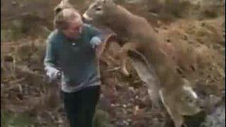Jeleń próbuje kopulować z dziewczyną