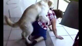 Pies Ją ebał