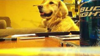 Pies stroi niezłe miny do muzyki
