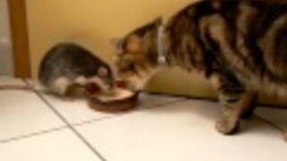 Jak szczur i kot