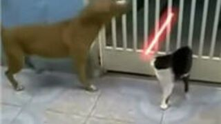 Cat Fights Off Dog With Lightsaber