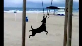 Helicopter dog