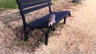 Wiewiórka atakuje !