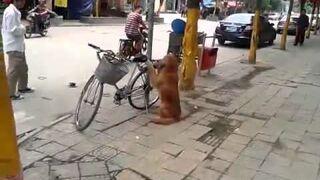 Pies pilnuje roweru