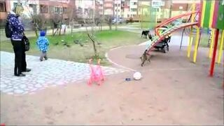 Kot atakuje psa