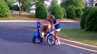 Pies który jeździ na rowerze