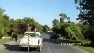 Rosja: Pies na dachu samochodu