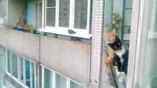 Neighbors always watching you
