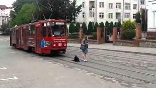 Pies zatrzymuje tramwaj
