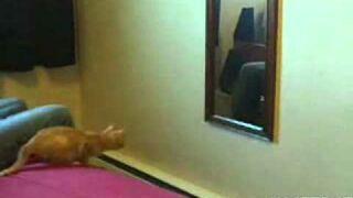 Kot wskakuje do lustra