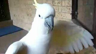 Szczekająca papuga