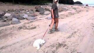 Leniwy kot na spacerze (fun)
