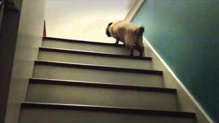 Pies wchodzi po schodach