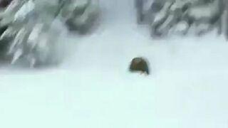 Reklama pralki z niedźwiedziem