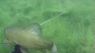 Podwodne polowanie z kuszą - spearfishing