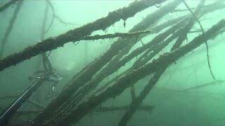 Podwodne polowanie w lesie