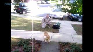Psy witają żołnierzy - wzruszające!