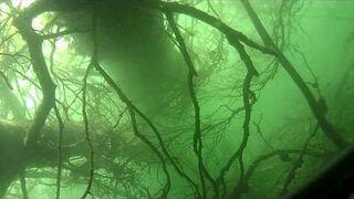 Podwodne polowanie - szczupak 3 kg