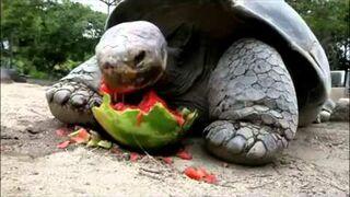 Jak je żółw? jak killer !