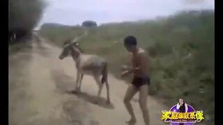 Kung fu donkey