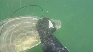 Karp 13.5 kg - podwodne polowanie kuszą
