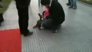 Pies marionetka z Argentyny