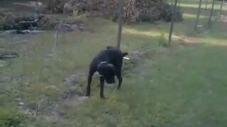 Pies sika na elektryczne ogrodzenie