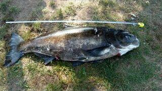 Tolpyga 48 kg 155 cm