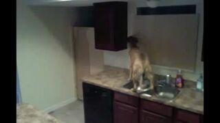 Pies postanawia uciec z kuchni przez okno