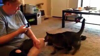 Co się dzieje, kiedy chcesz porozmawiać z kotem