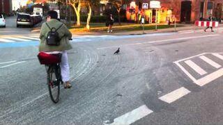 Rozjechali tańczącego gołębia na skrzyżowaniu