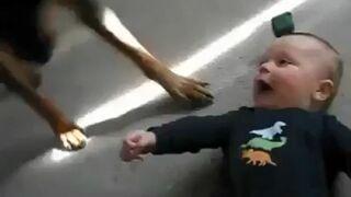 Rottweiler rozbawia dziecko